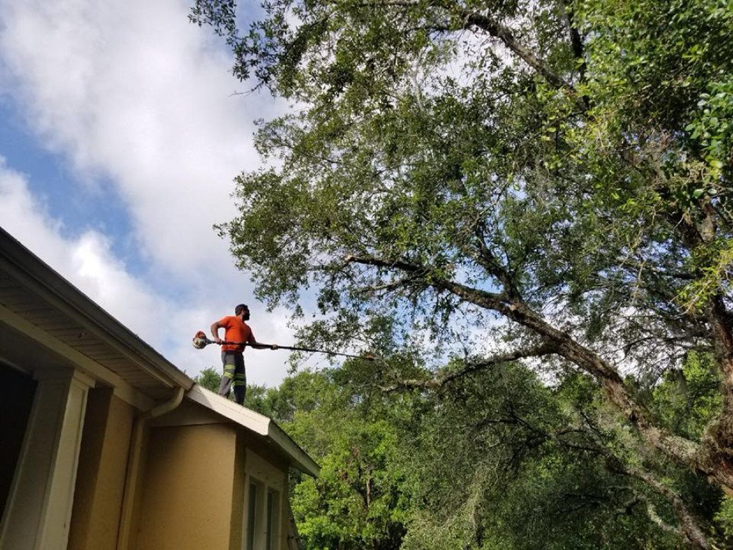 Why is professional tree care so important?